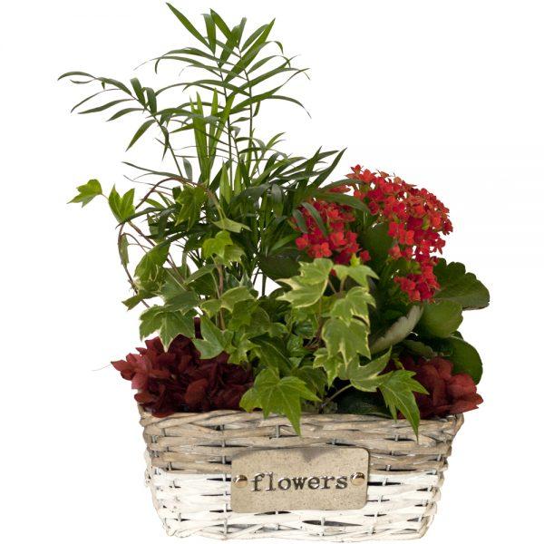 Cesta con plantas de interior B