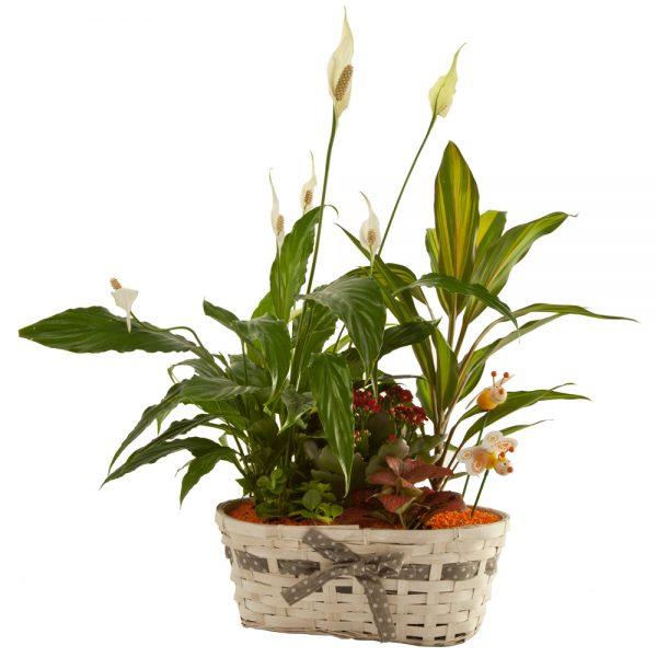 Cesta con plantas de interior J