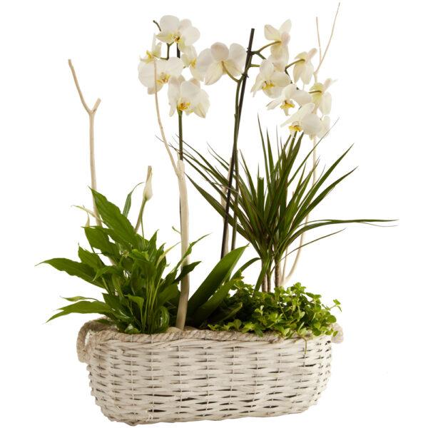 Cesta con plantas de interior G