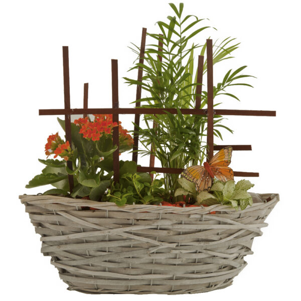 Cesta con plantas de interior I