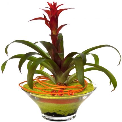 planta-roja