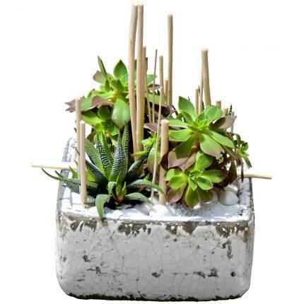 Centro-con-cactus