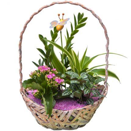 Cesta mimbre con plantas de interior