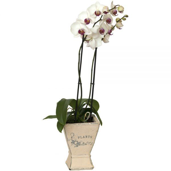 Orquídea con macetero de cerámica