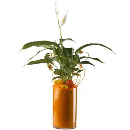 Jarron-de-cristal-con-planta