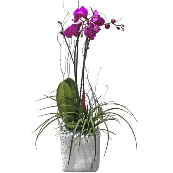 Composición de orquídea