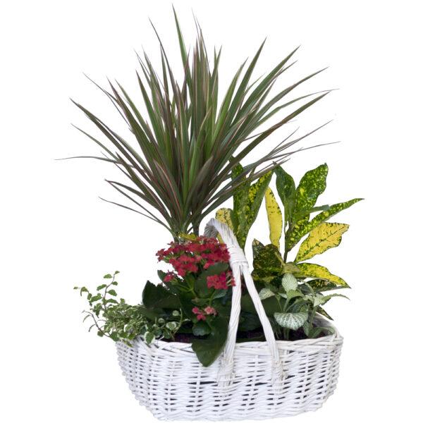 Cesta de mimbre con plantas de interior