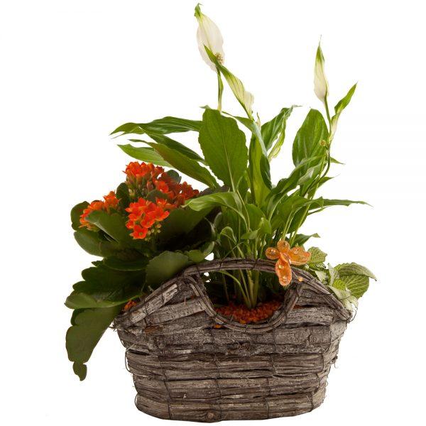 Cesta con plantas de interior H