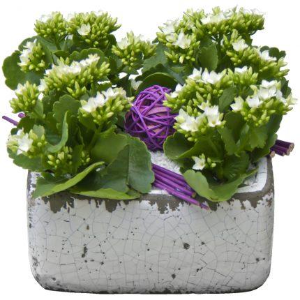 planta-con-macetero