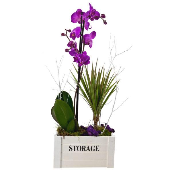 Composición con orquídea en caja de madera