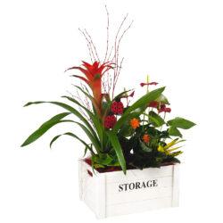 Composición de plantas en caja de madera A