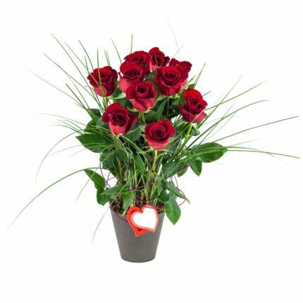Centro de diez rosas rojas - Floristería Núñez