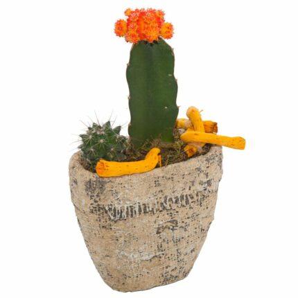 cactus-alto-con-flor