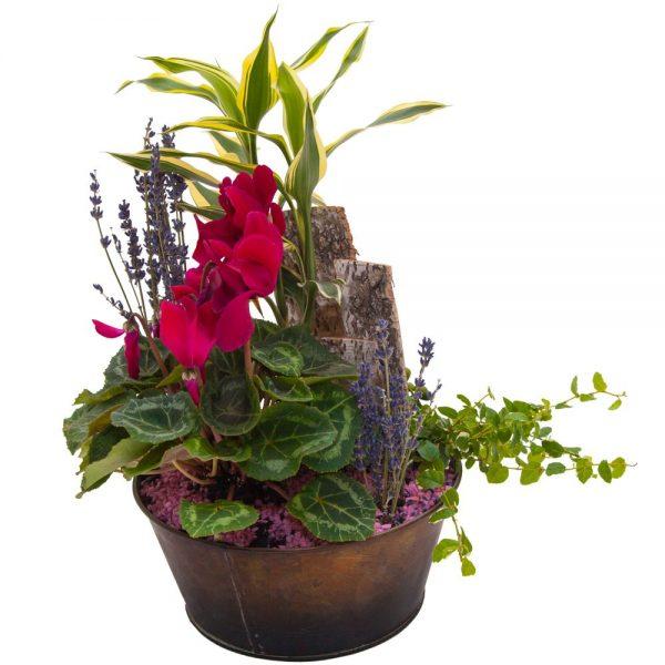 Composición plantas de interior E