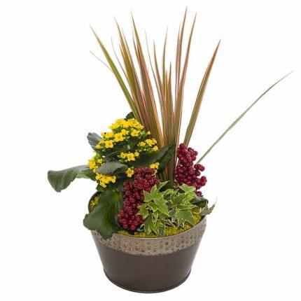 Composicion plantas de interior D