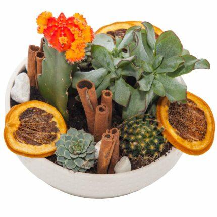composicion-de-cactus-y-frutas-secas
