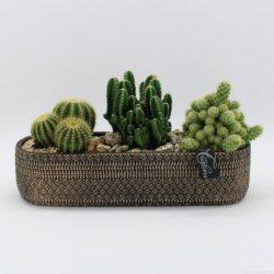 Ceramica con cactus